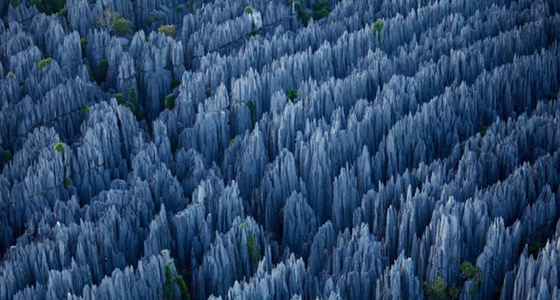 The-Stone-Forest