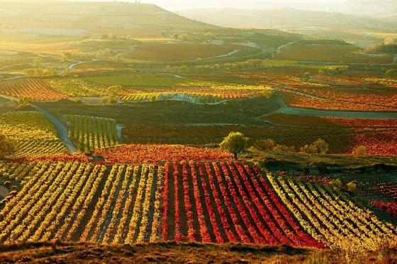 La-Rioja-560x372 (2)