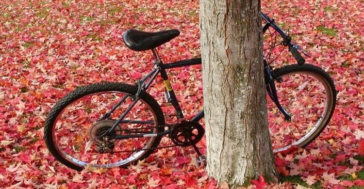 Bici tra le foglie.
