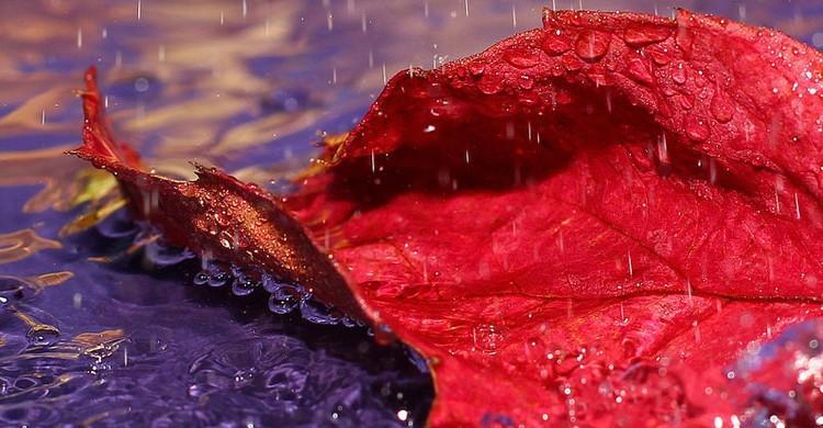 Foglia sotto la pioggia.