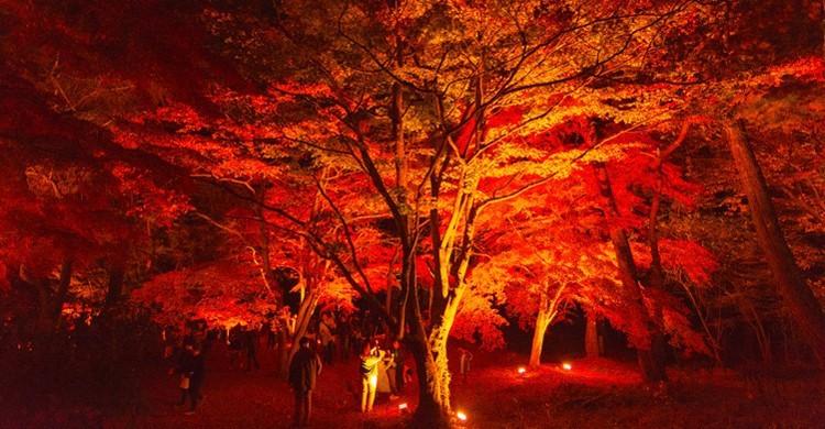Bosco di Nagatoro-Machi, Giappone.