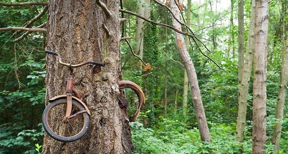 Bici-en---rbol