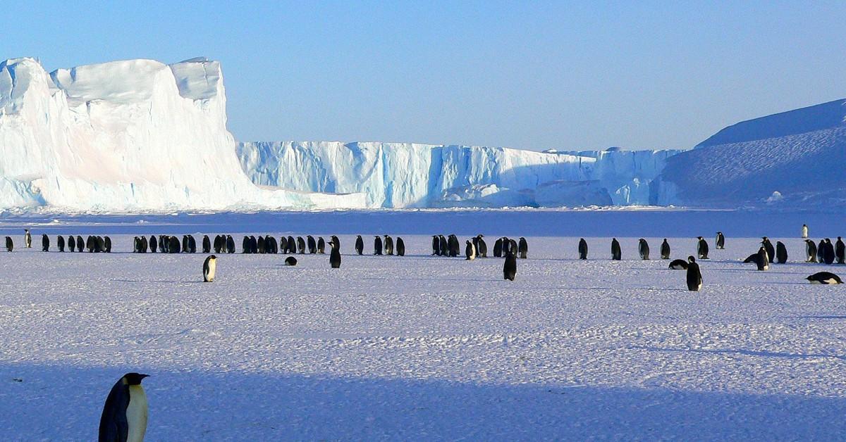 Pingüinos-emperador-en-la-Antártida-Flickr