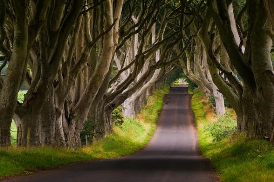 the-dark-hedges-northern-ireland1