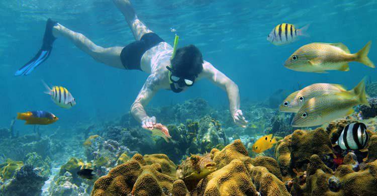 snorkel-bocas-toro