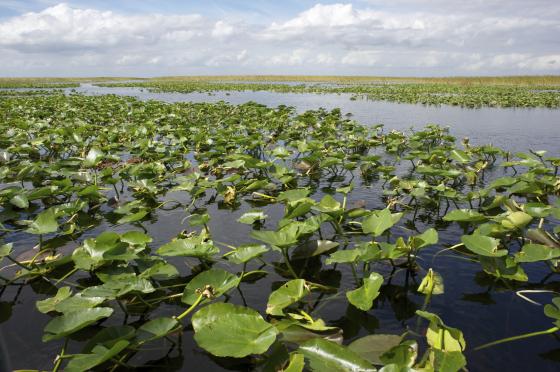 Everglades-560x372