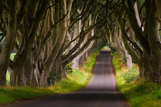 the-dark-hedges-northern-ireland1