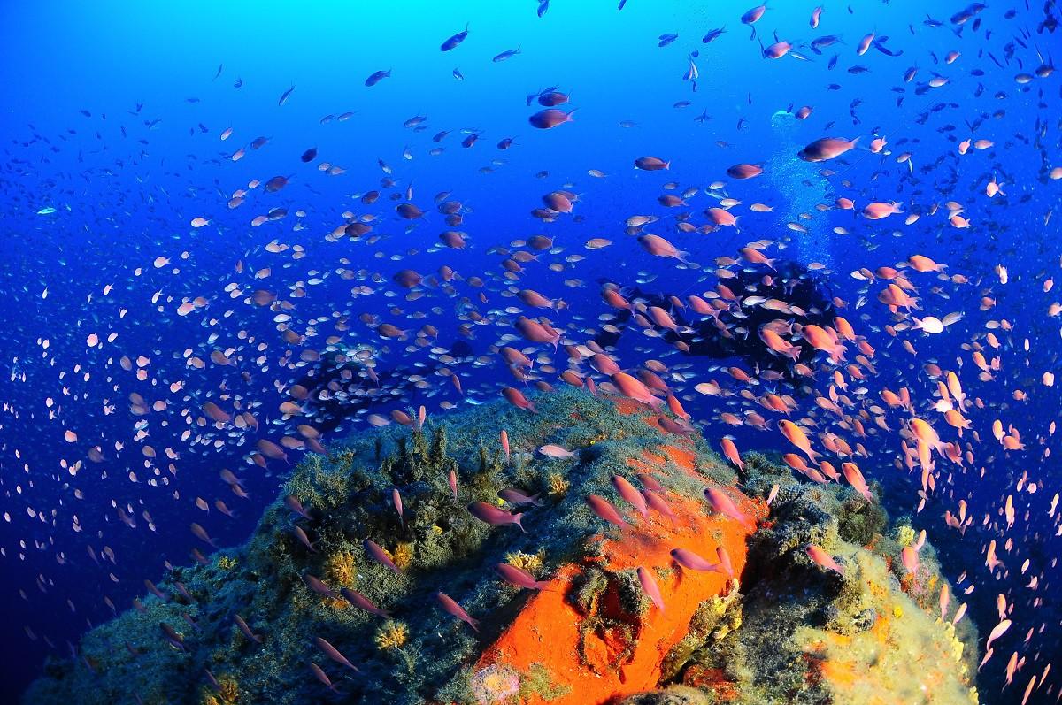 corso-di-biologia-marina