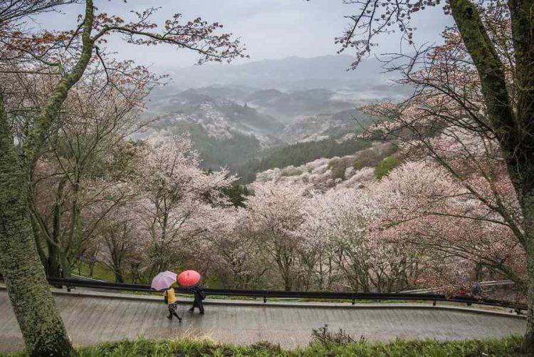 parco di Nara,