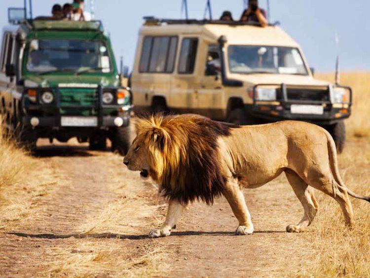 Shongolo Express: una safari in treno alla scoperta dell'Afric