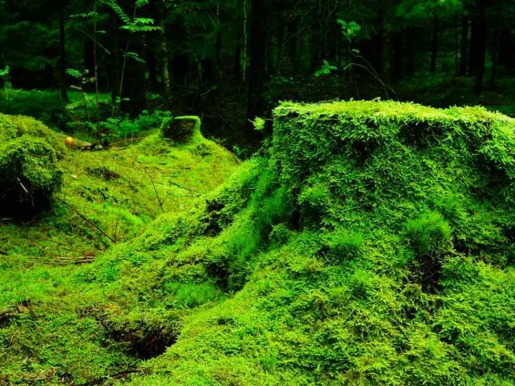21 marzo, celebriamo la giornata internazionale delle foreste