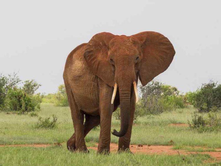 Animal Lovers, l'agricoltore africano che porta l'acqua agli animali selvatici