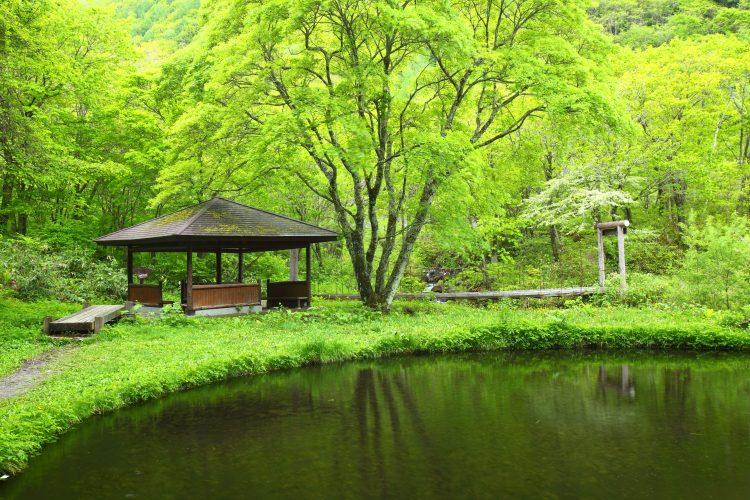 Forest Therapy, il bagno multisensoriale nella foresta