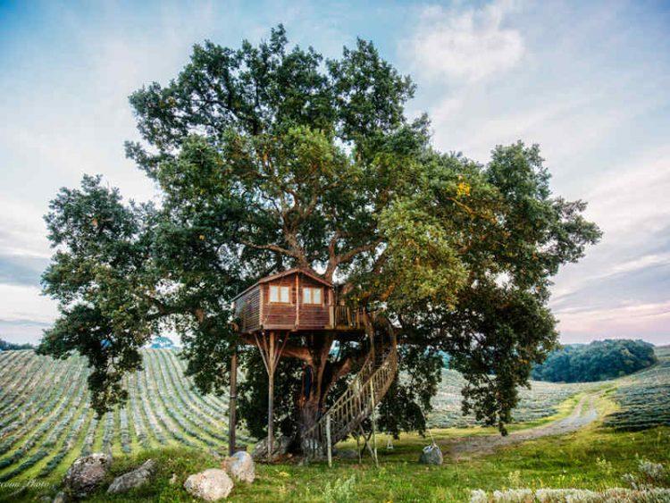 Una notte sull'albero, dove realizzare il sogno della propria infanzia