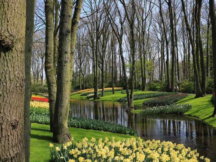 Giardino dei Tulipani, con la bella stagione riapre Keukenhof